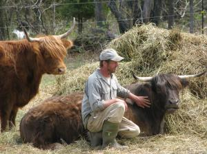 cory and cows