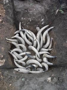 horn manure