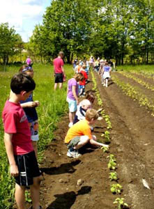 Visiting students plant sunflowers